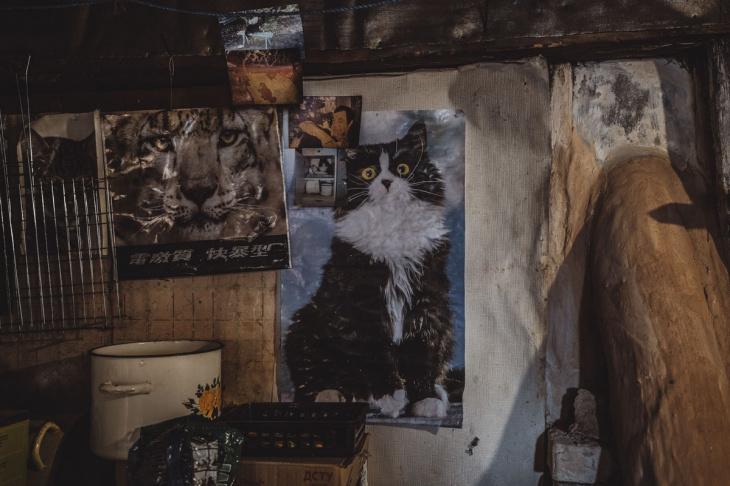 Деревни в Чернобыльской зоне отчуждения, где люди бросили вызов радиации