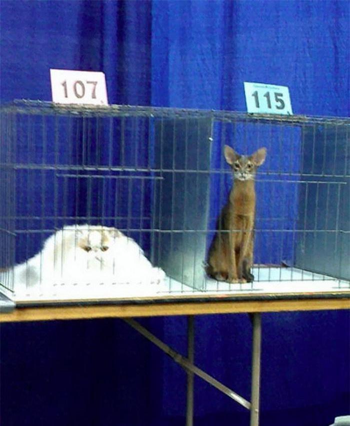 Когда животные достигают своего жидкого состояния