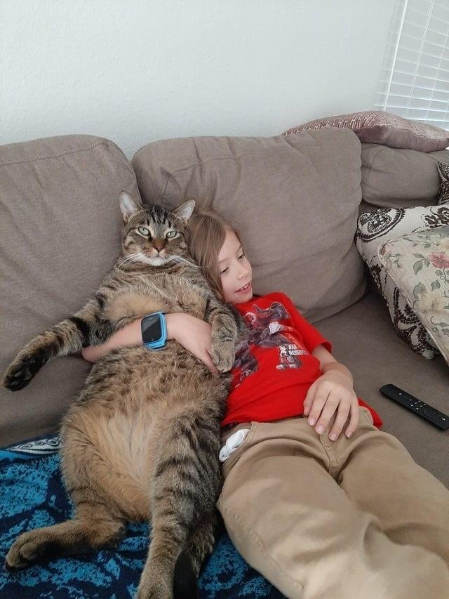 Крупные коты, которые завели людей