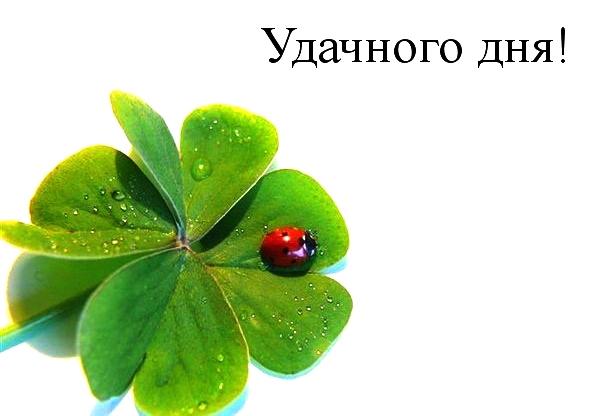 Прикольные картинки с пожеланием «Удачного дня»