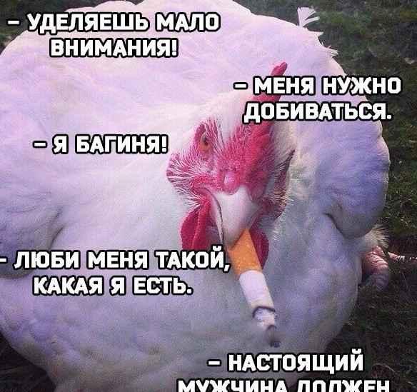 До слёз смешные картинки и мемы