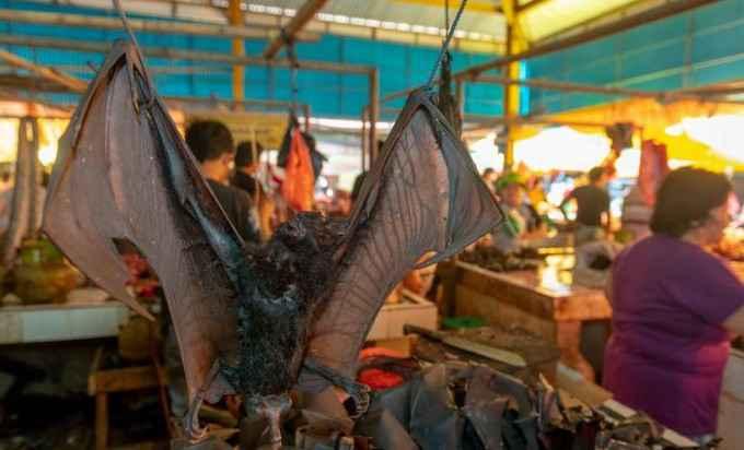 Шокирующие фотографии с индонезийского влажный рынока во время COVID-19