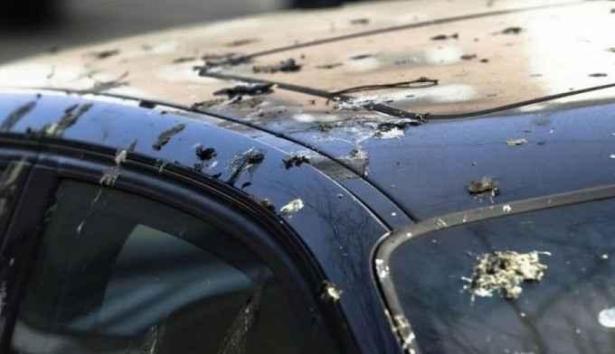 Каким образом птичий помет вредит кузову и ЛКП автомобиля?