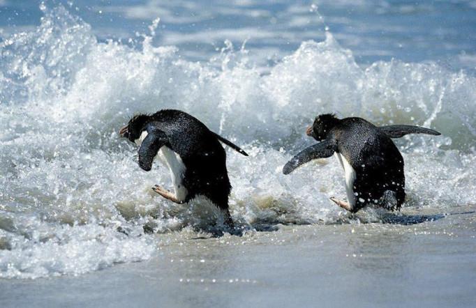 Фотографии забавных животных