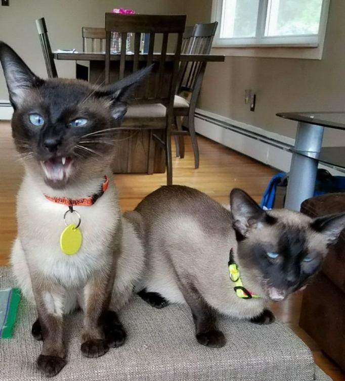Смешные и позитивные животные