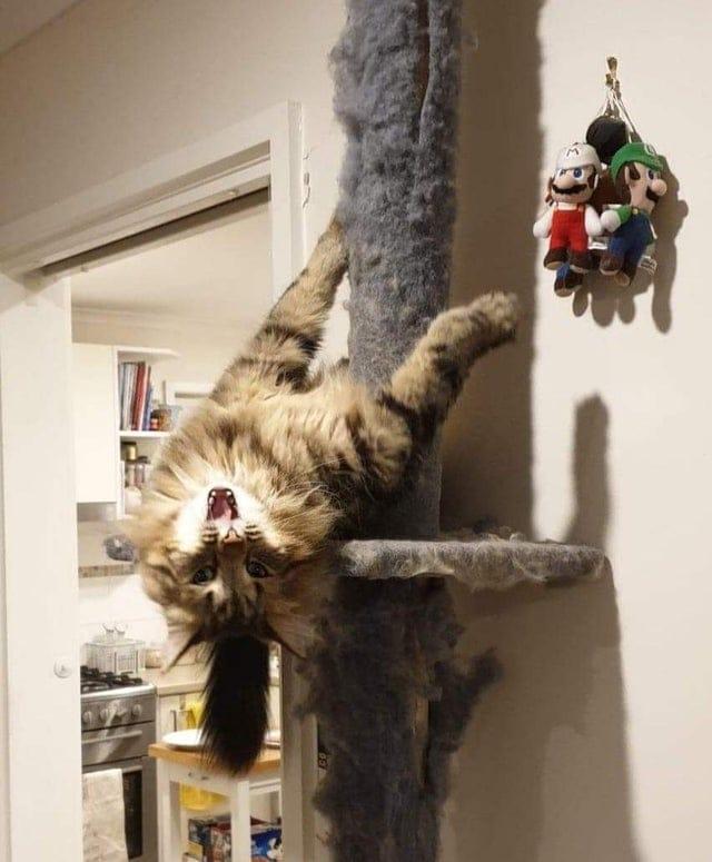 17 фотографий котов, которые не стесняются смешить всех вокруг