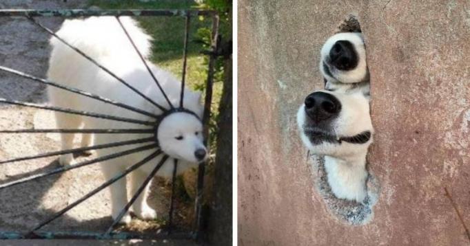 18 случаев, когда собаки вели себя как настоящие дураки