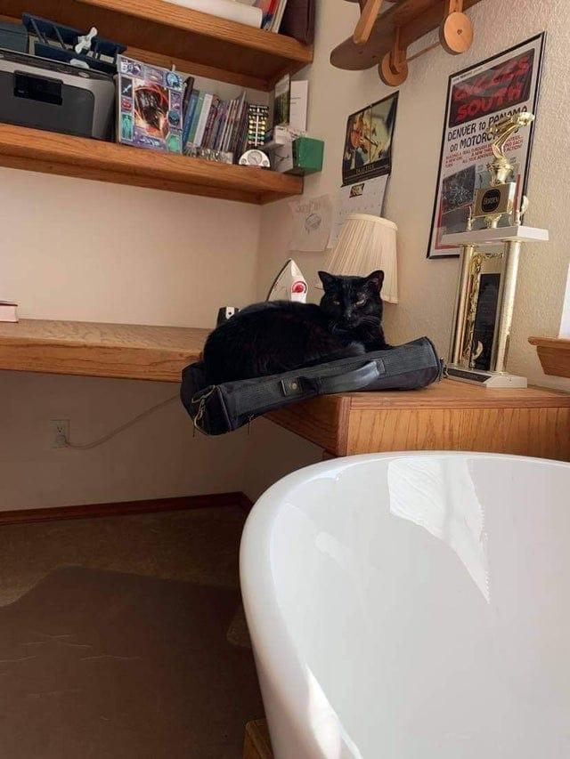 20 котов, чьи позы ломают человеческий мозг и заставляют задуматься над тайными возможностями наших питомцев