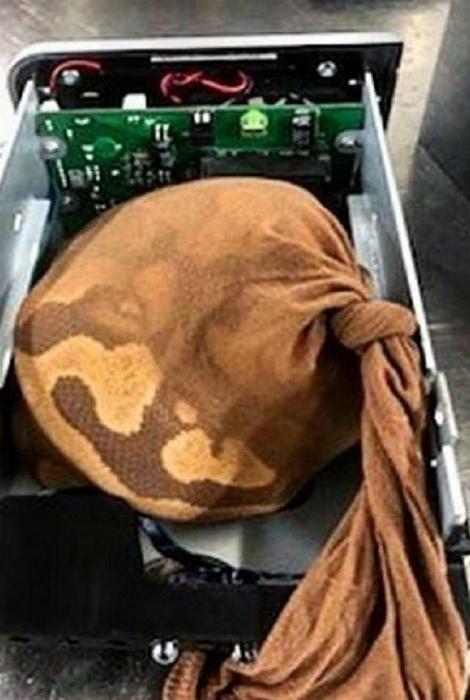 «Меня не касается»: 12 запрещенных вещей, изъятых в аэропорту