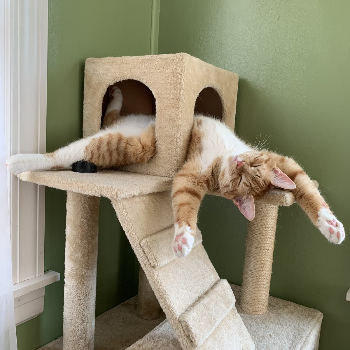 Когда сон застал врасплох: подборка забавных поз животных во время сна