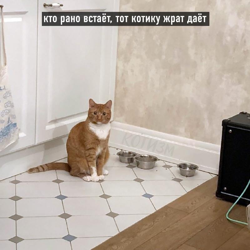 Котовьи поговорки