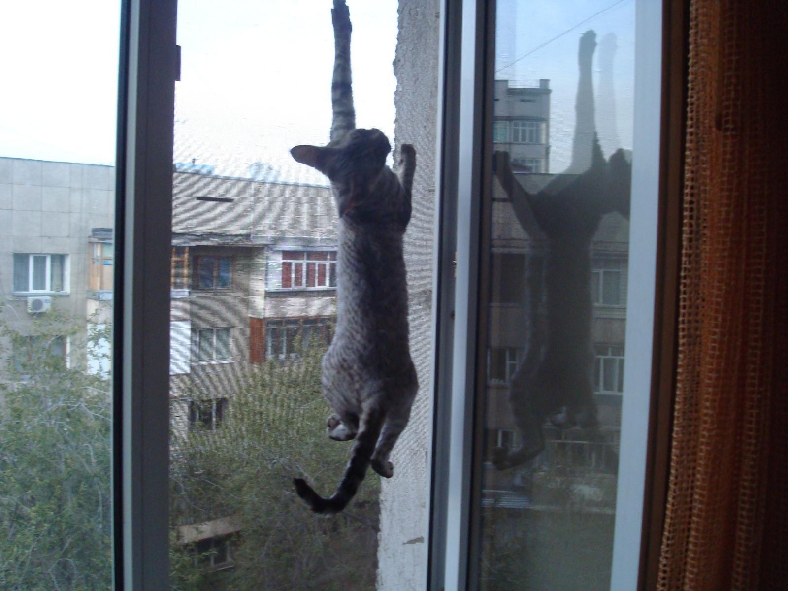 Коты — самоубийцы