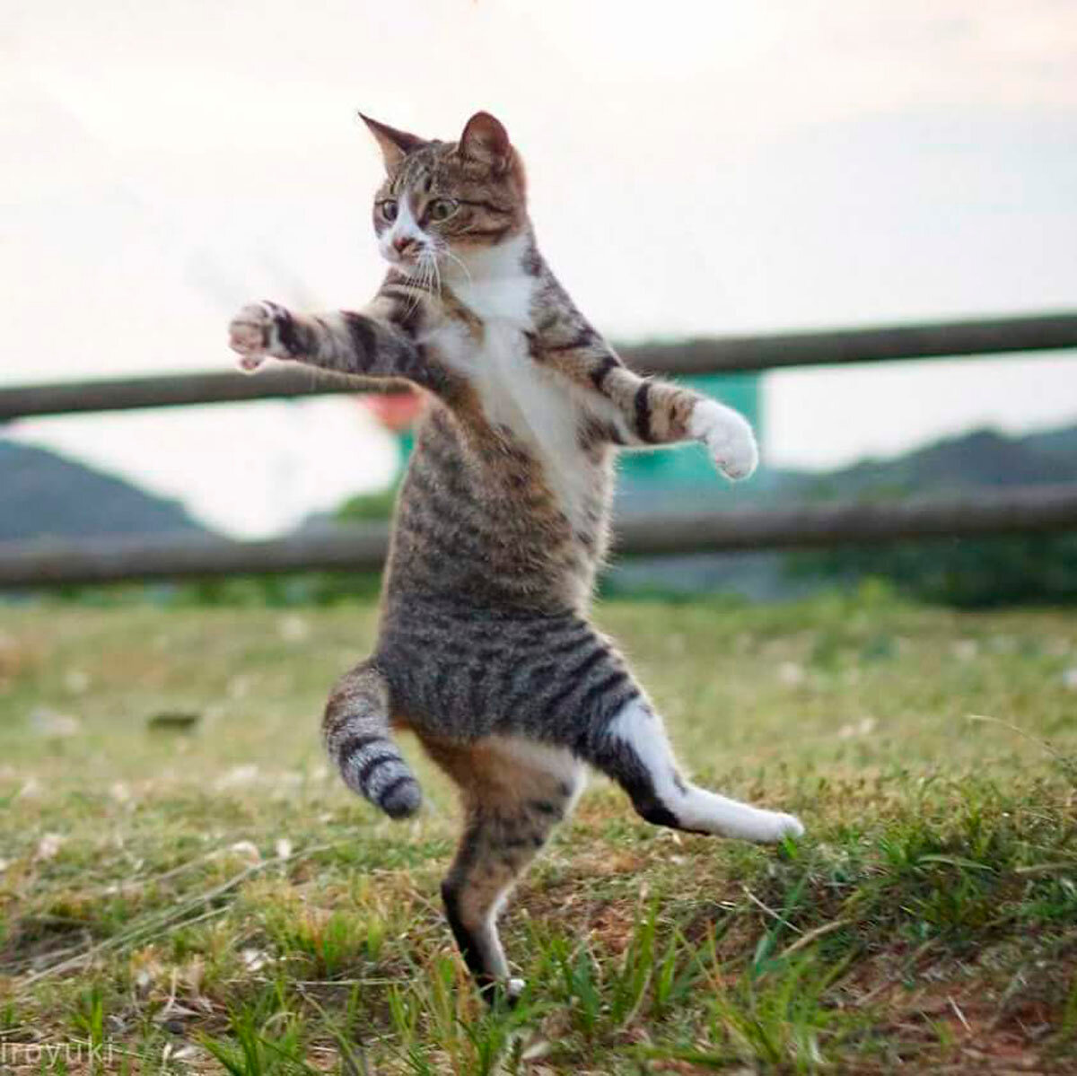 В танцах даже кошки