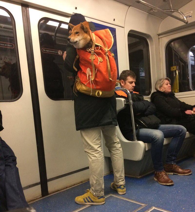 Животные в метро или как проехать «зайцем»