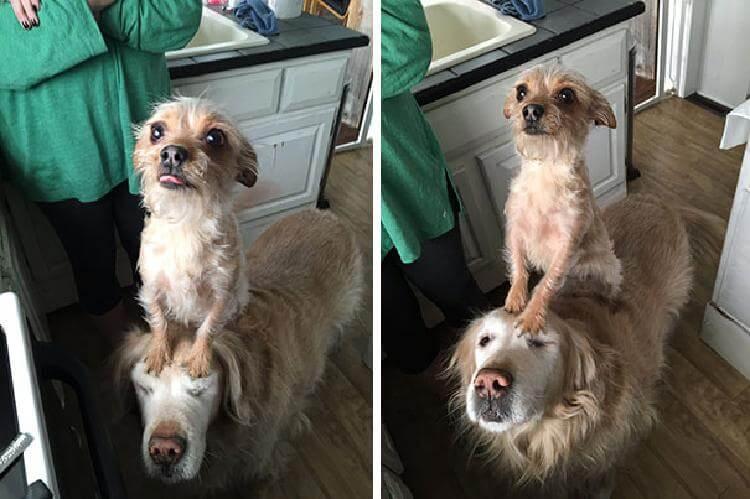 Собаки-попрошайки