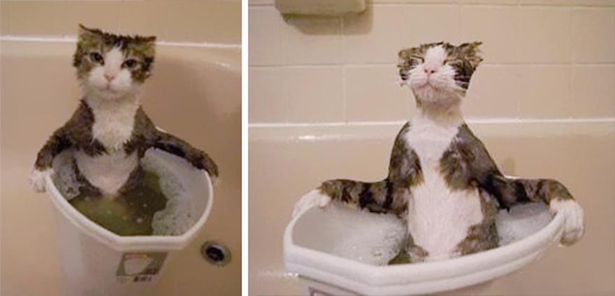 Коты-плавцы