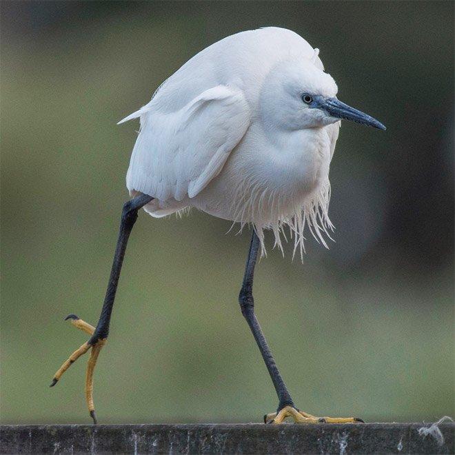 Подборка самых забавных птиц