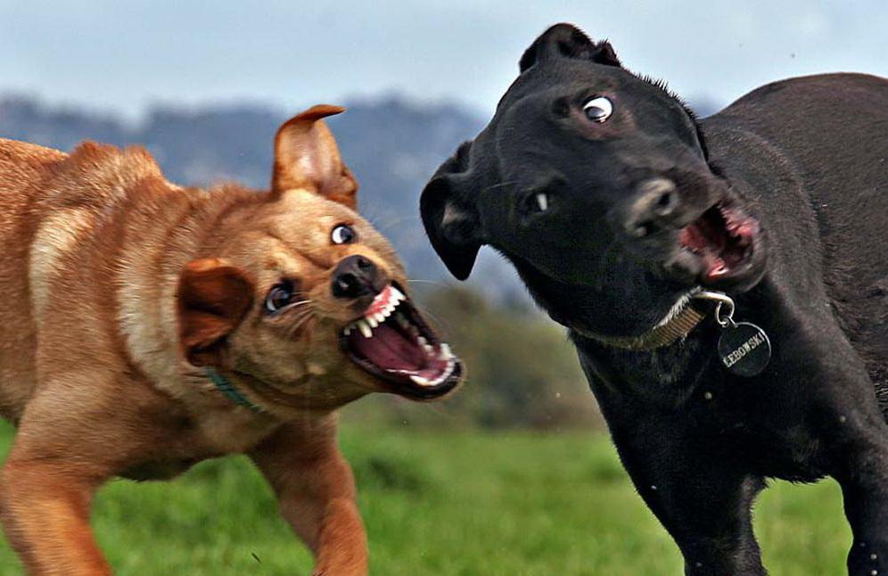 Животный бокс