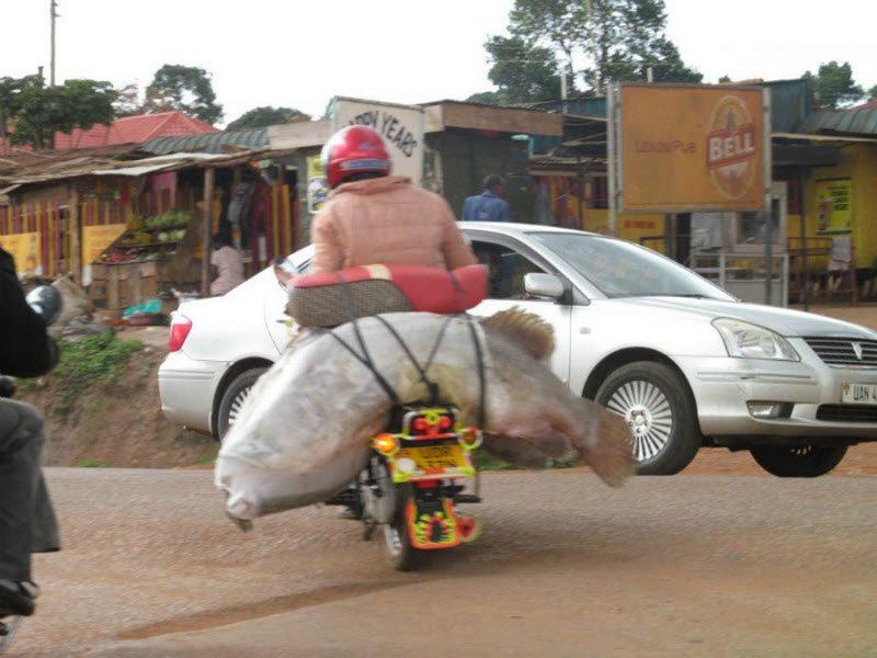 Прокатись с юморком: подборка смешных ситуаций, которые можно увидеть на дороге