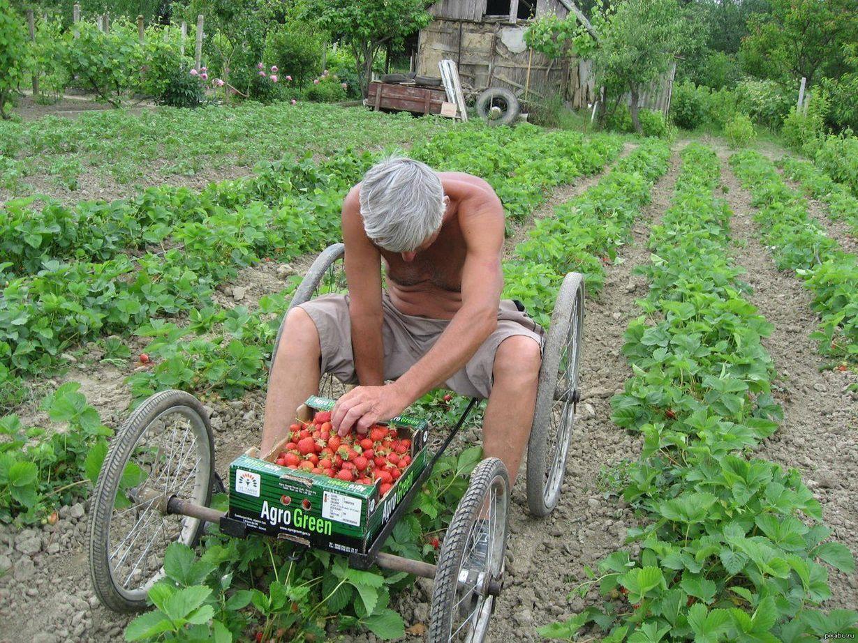 Подборка забавных изобретений огородников