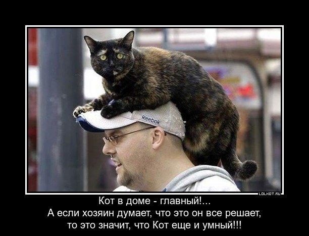 Кошачьи думы