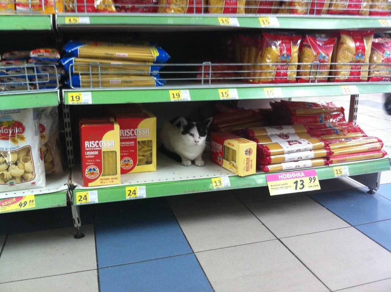 Когда отправил в магазин домашнего питомца
