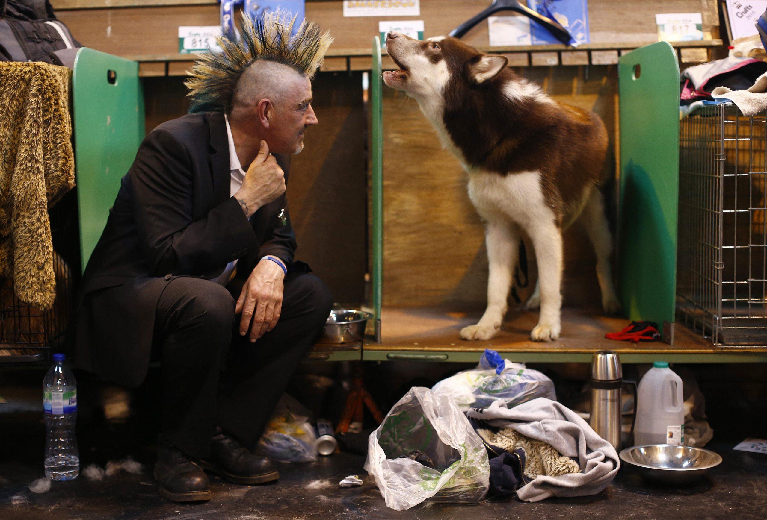 Подборка смешных фото с собачьих выставок