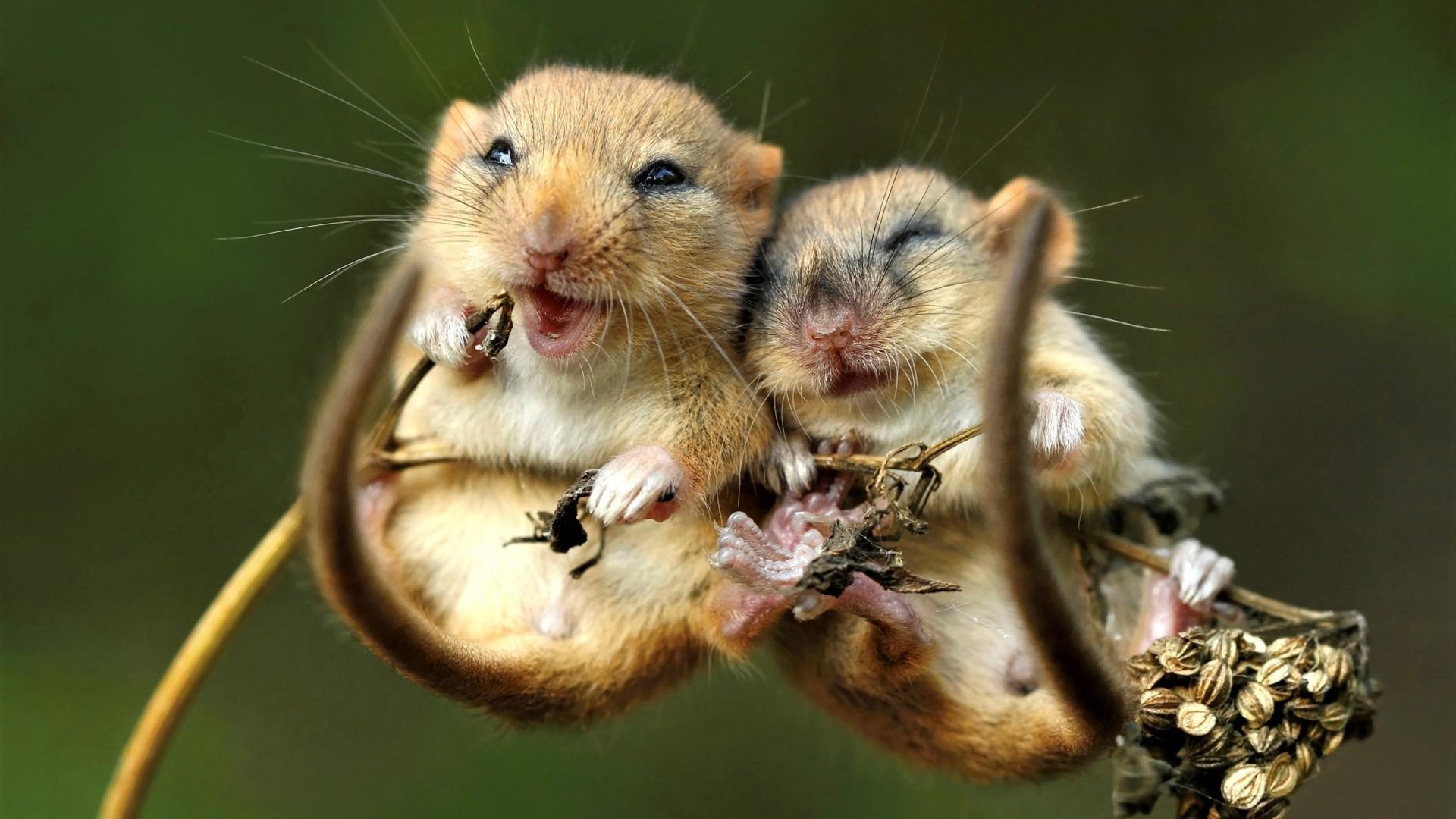 Подборка смешных фото грызунов
