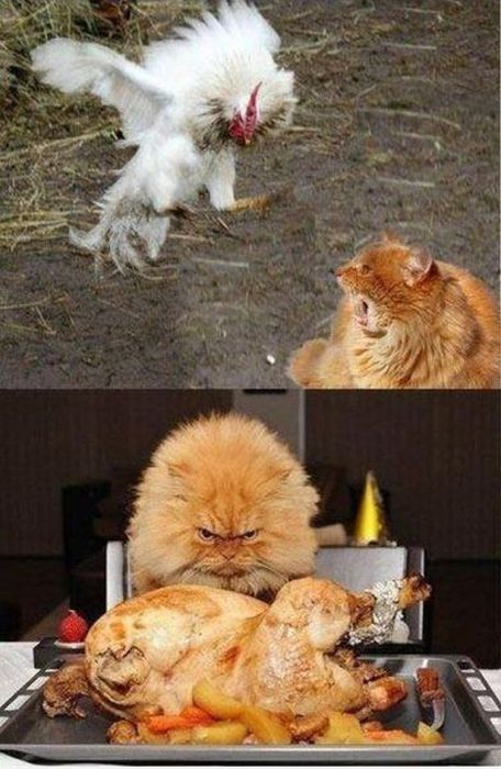 Мстя кота страшна
