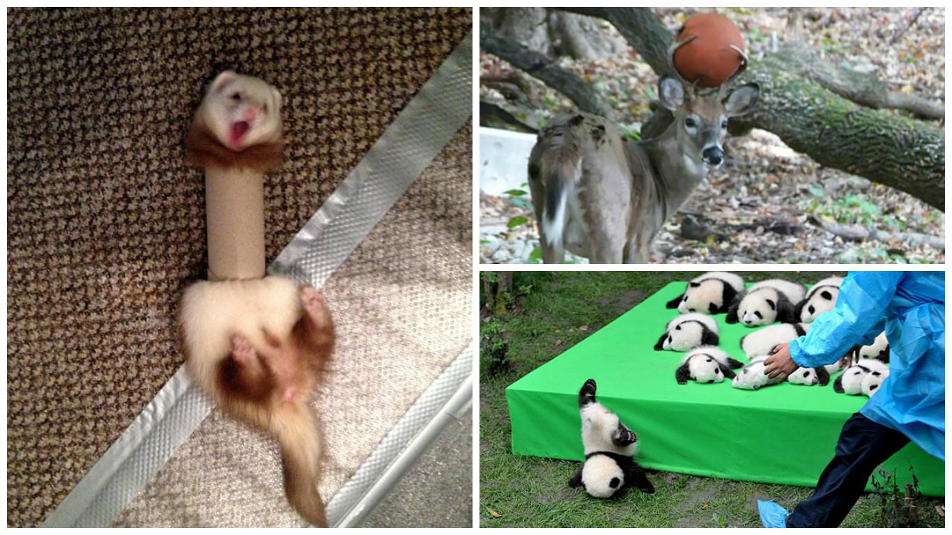 Подборка фото приколов про животных, которые попали в западню