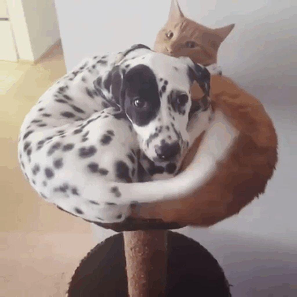 Собаки, в которых говорит кошачье воспитание