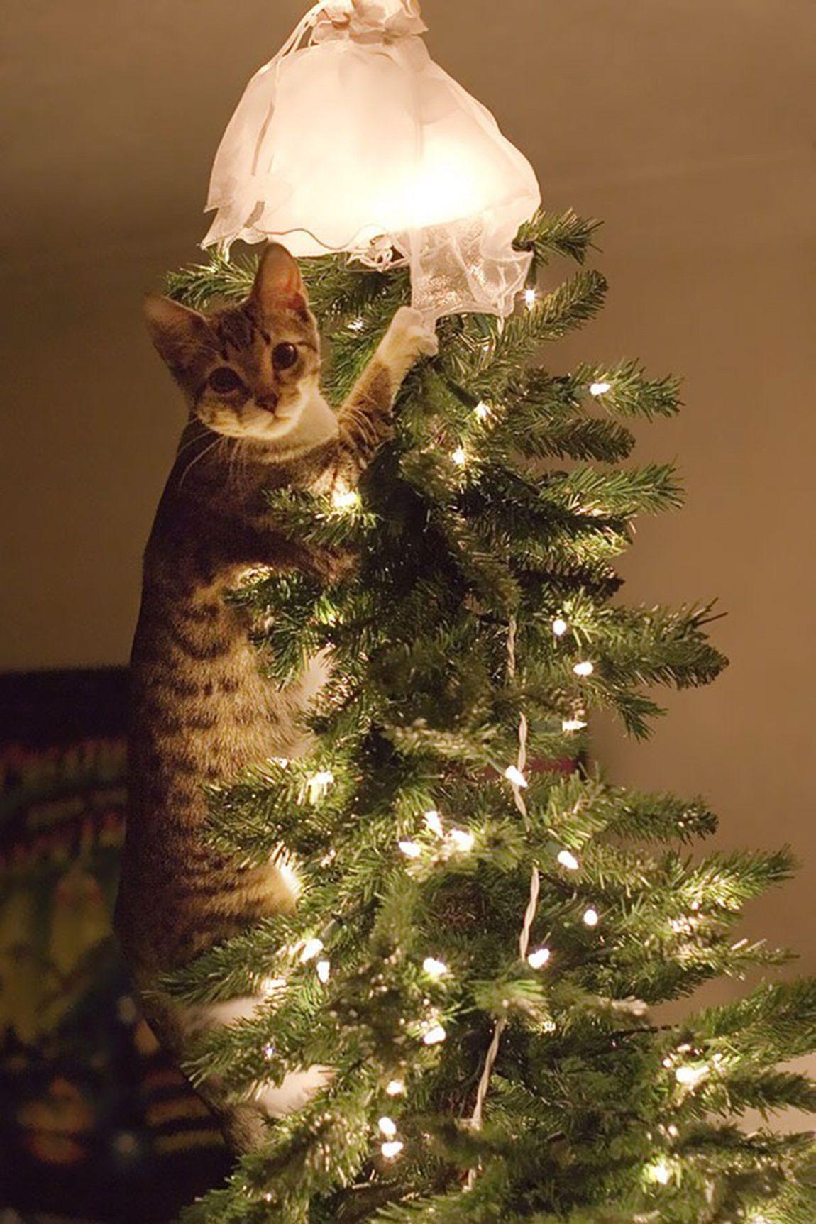 Когда кошка затаила обиду на ёлку