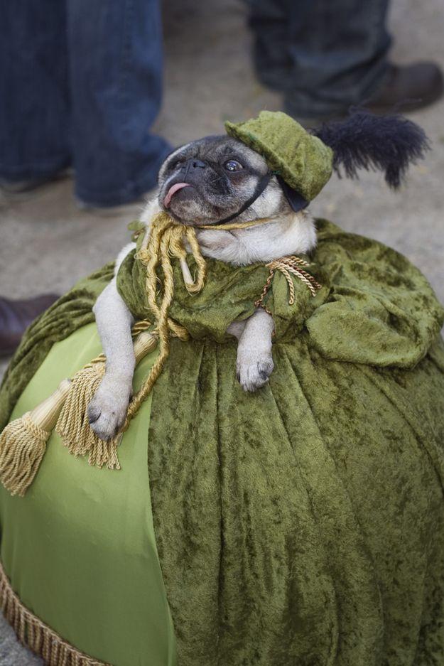 Когда хозяин устроил вечеринку: подборка самых смешных маскарадных костюмов животных