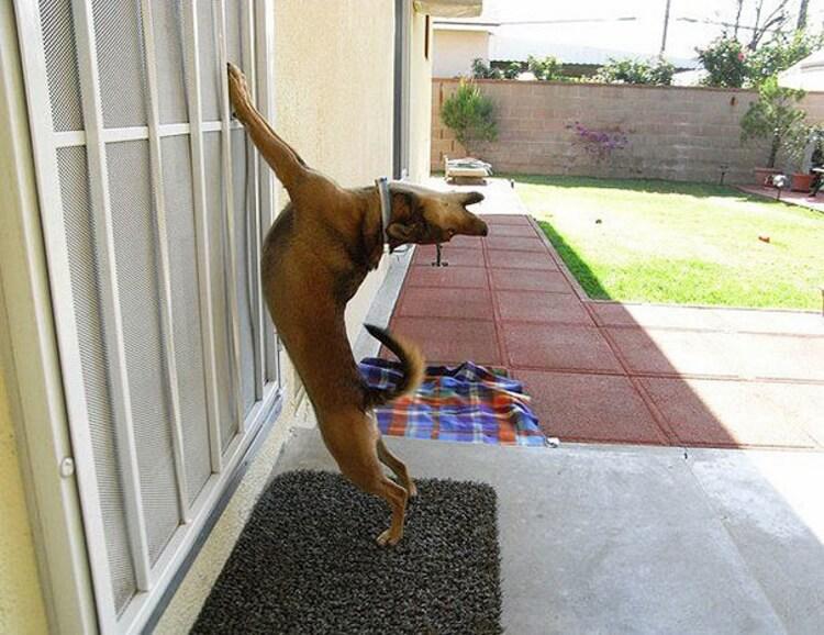 «Ну пустите меня домой»: подборка фото забавных животных, которых не пускают домой