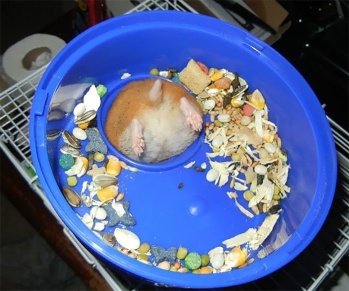 Подборка фото животных, которые застряли во время еды