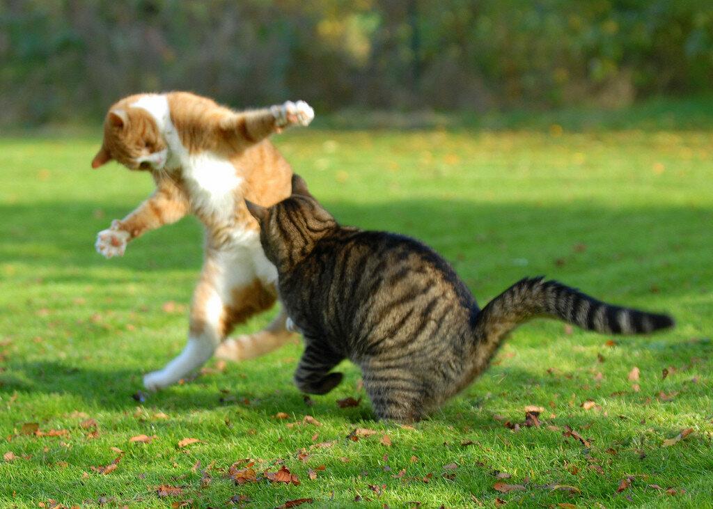 Кошачье нападение