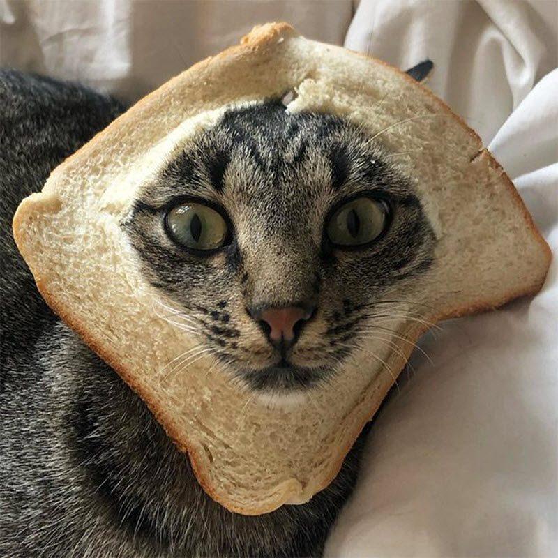 Подборка самых смешных фото с челленджа под названием «Животные в хлебе»
