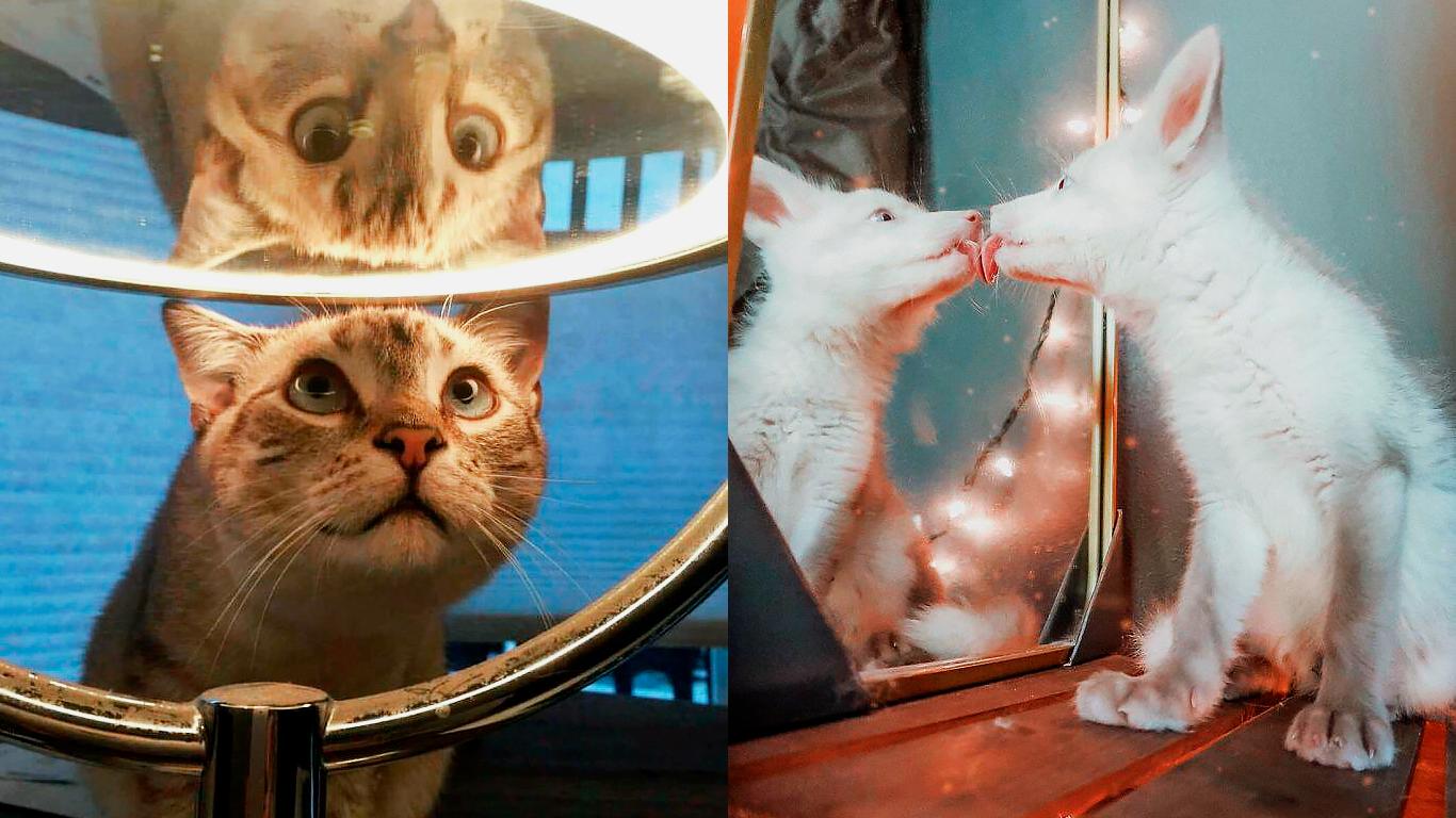 Животные — нарциссы