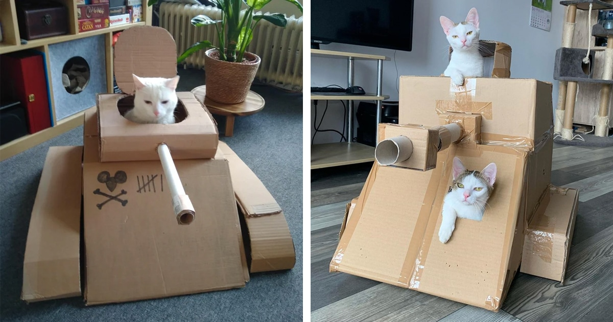 Танки для кошек