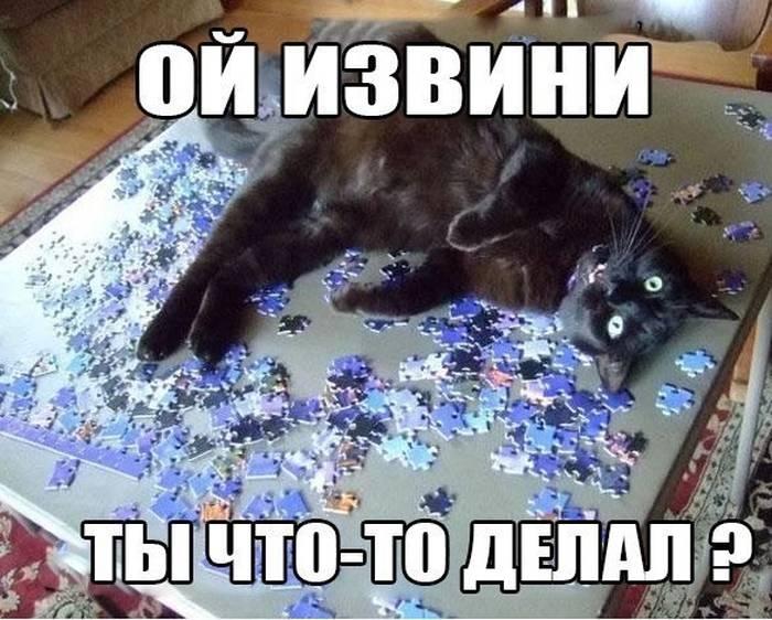 Фото подборка кошек, которые любят собирать пазлы