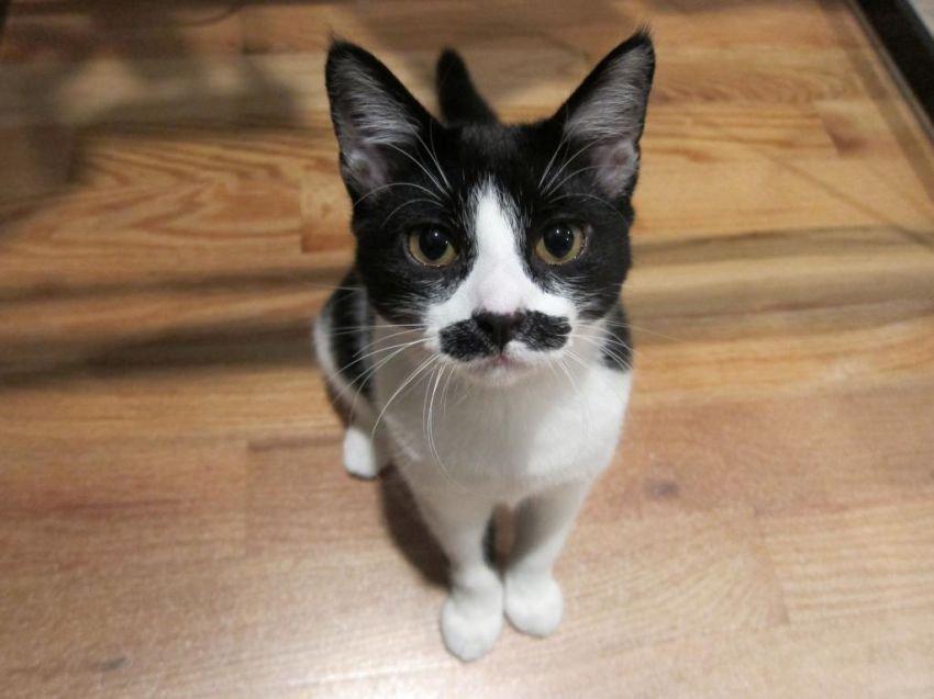 Коты-усачи