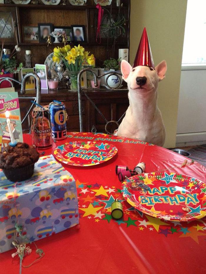 Когда у пёсика день рождения