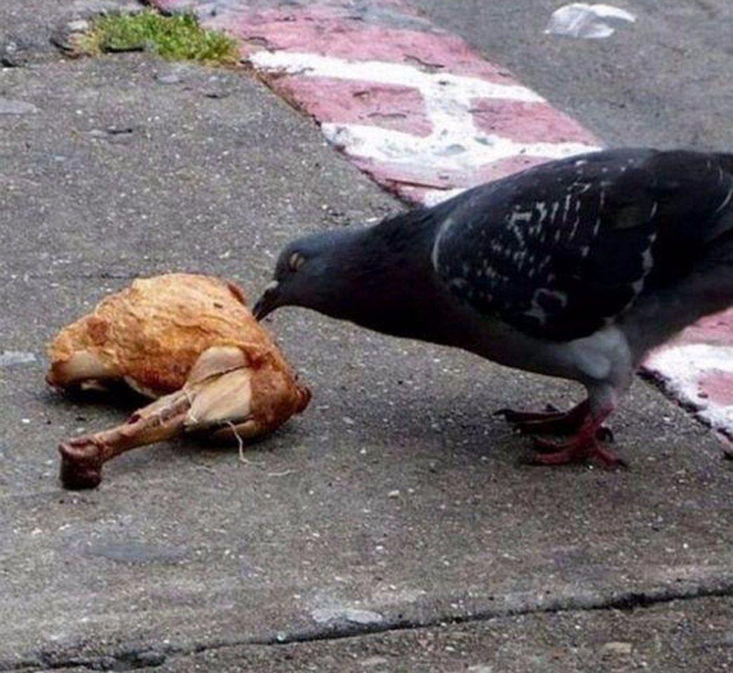 Подборка фото приколов про голубей