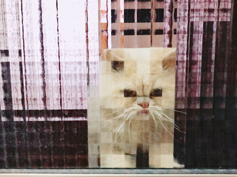 Необычные фото котиков