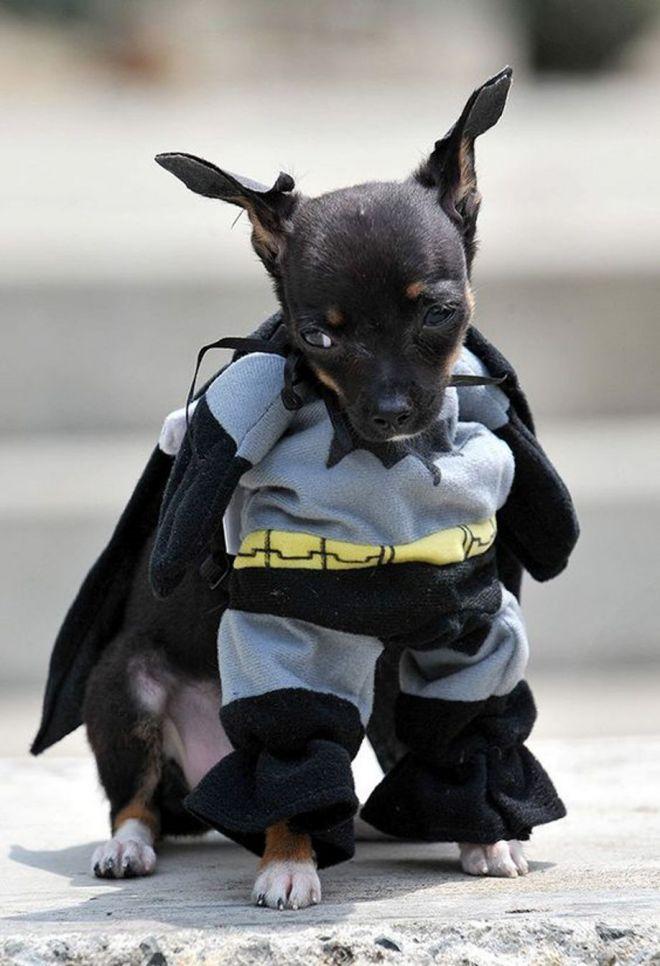 Собаки-супер герои