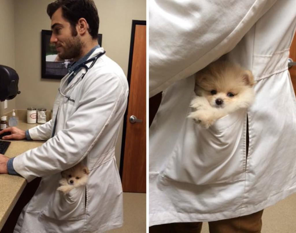 Будни ветеринара