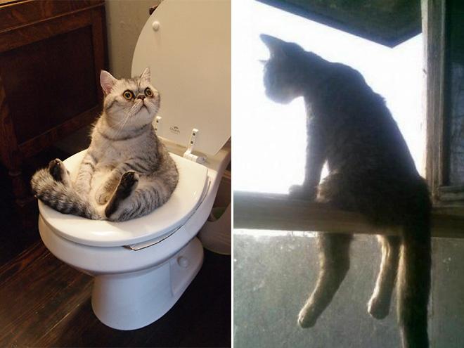 Подборка забавных фото котов, которые умеют сидеть, как люди