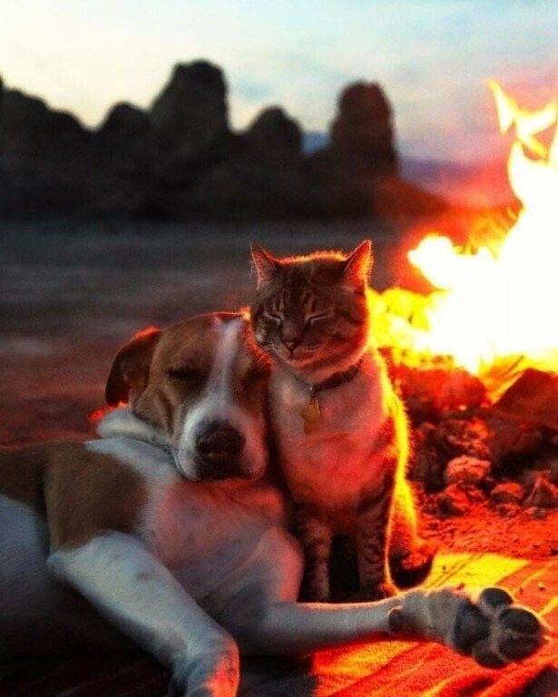 Кот и пес в роли фотомоделей