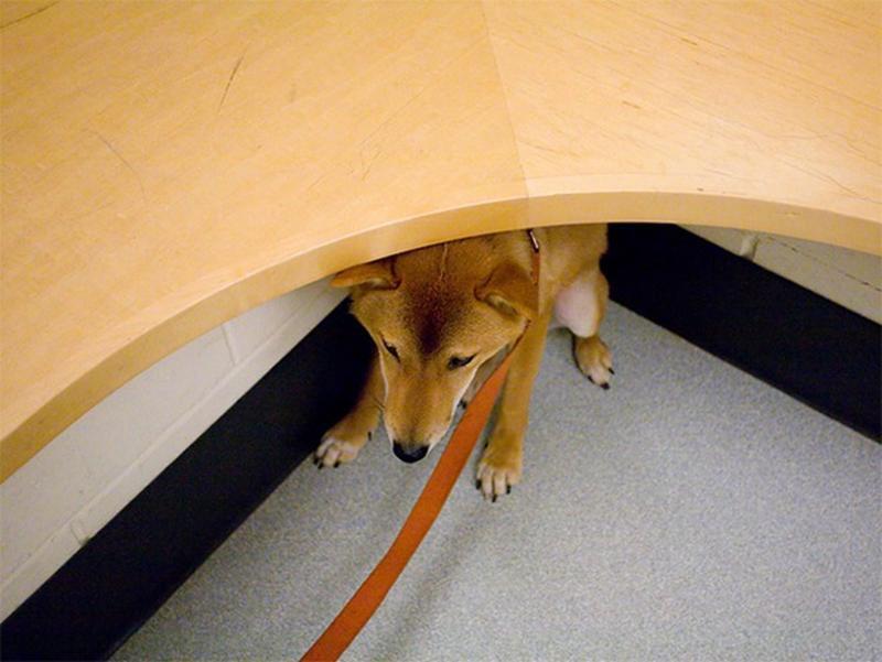 Подборка фото животных, которые боятся похода к ветеринару