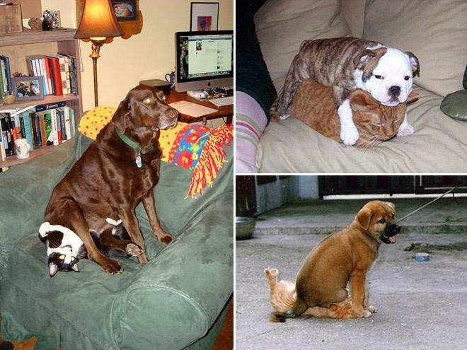 Месть собачья
